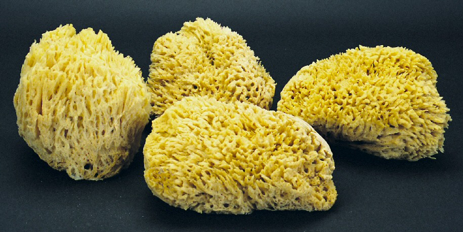 Natural Sea Sponges - 7 1/2 - 8""